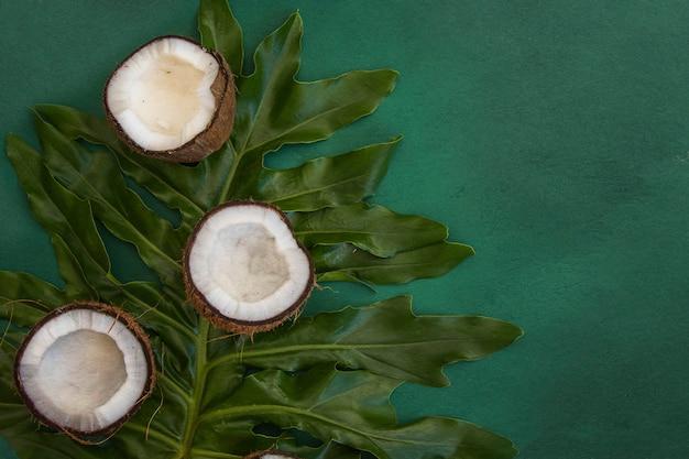 Feuilles vertes tropicales feuilles de palmier et noix de coco