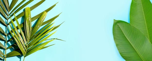 Feuilles vertes tropicales sur fond bleu.