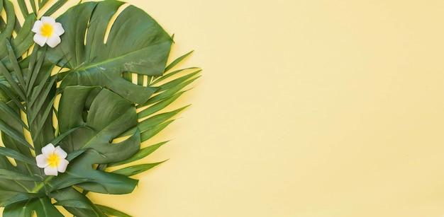 Feuilles vertes tropicales fond de palmier