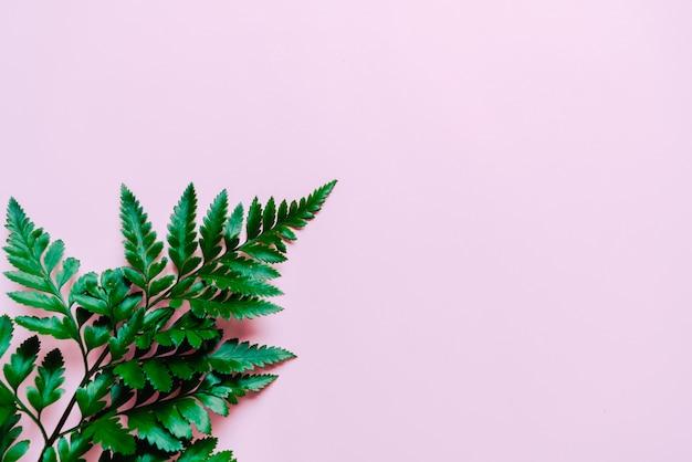 Feuilles vertes tropicales sur fond rose