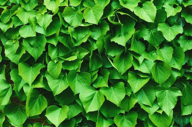 Feuilles vertes tropicales texture organique