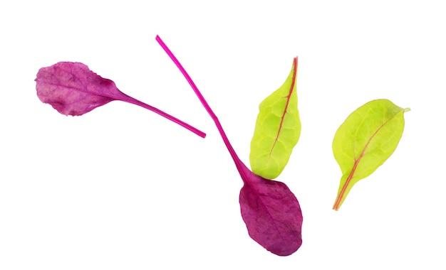 Feuilles vertes et violettes de blettes de laitue sur fond blanc