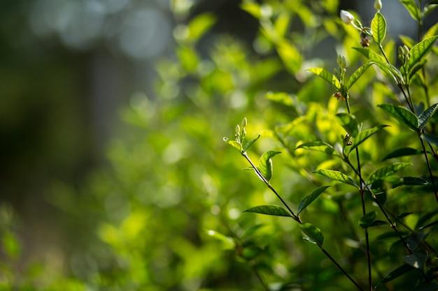 Les feuilles vertes