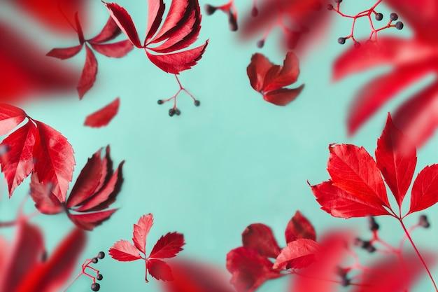 Les feuilles violettes et les baies bleues lévitent sur fond bleu. cadre d'automne aéré transparent