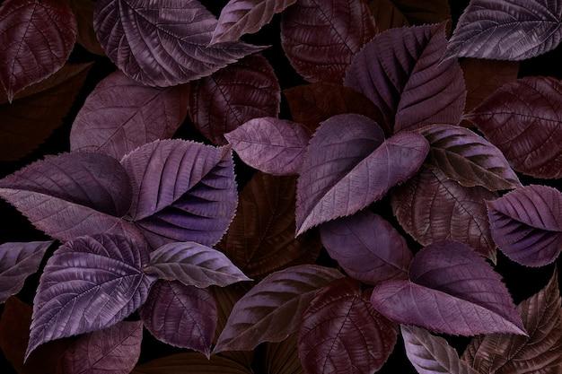 Feuilles violettes dans le jardin