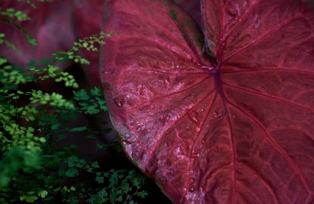Les feuilles vives dans le jardin tropical