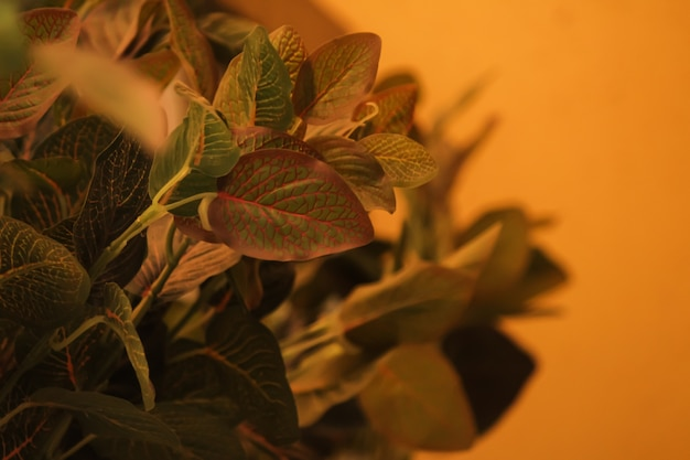 Feuilleter les feuilles