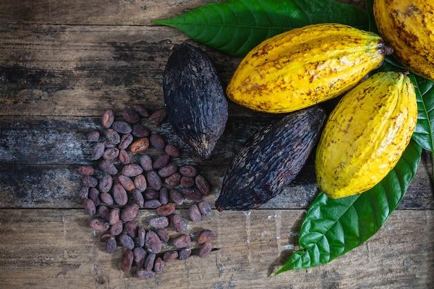 Fèves de cacao fraîches et cacao sur un fond en bois