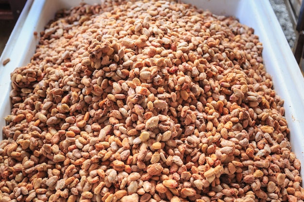 Fèves de cacao fraîches et graines de cacao fraîches dans un seau pour faire du chocolat