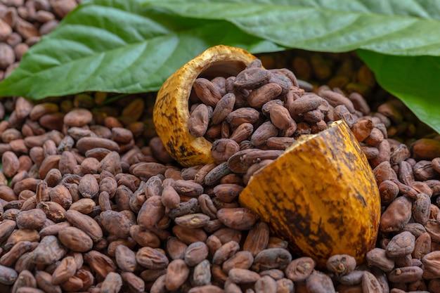 Fèves de cacao et fruits de cacao sur bois