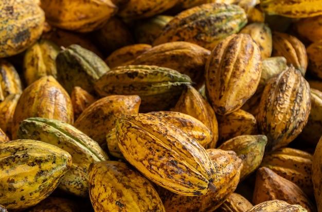 Fèves de cacao et gousse de cacao sur un fond en bois