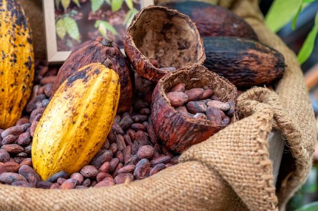 Fèves de cacao avec gousse de cacao