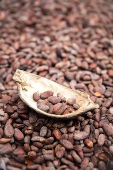Fèves et gousses de cacao crues