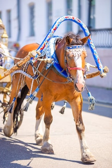 Fiaker traditionnel d'entraîneur de cheval en europe