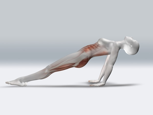 Figure féminine 3d en pose de planche inversée avec les muscles mis en évidence