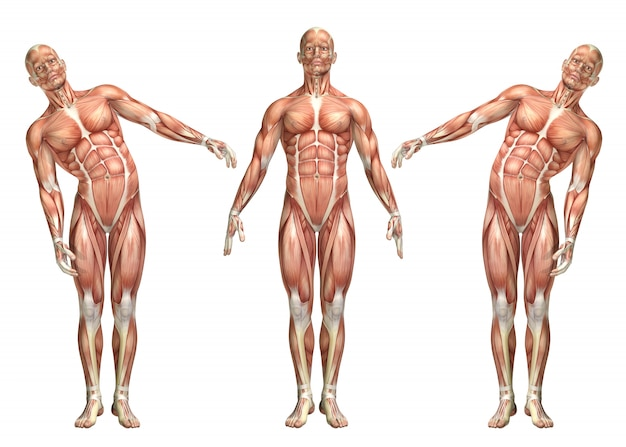 Figurine médicale 3d montrant la flexion latérale du tronc
