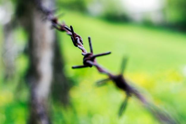 Fil barbelé. un fil de fer barbelé sur une clôture avec des pièces en bois