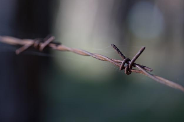 Fil de fer barbelé close up extérieur et toile d'araignée
