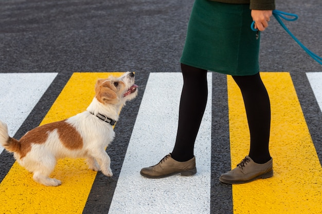 La fille apprend au chien à traverser le passage pour piétons