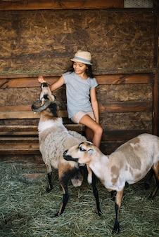 Fille assise dans la grange en train de nourrir des moutons