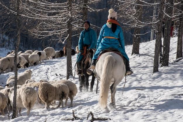 Fille berger assis sur un cheval et un troupeau de moutons dans la prairie avec des montagnes enneigées sur fond