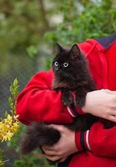Fille caressant un chat gris blanc géant à l'extérieur. la fille du jardinier tient son chat. une femme caresse un petit chat à l'extérieur au coucher du soleil. femme tenant son chat dans le jardin.