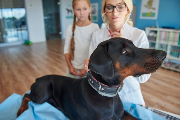 Fille avec doberman chez un vétérinaire