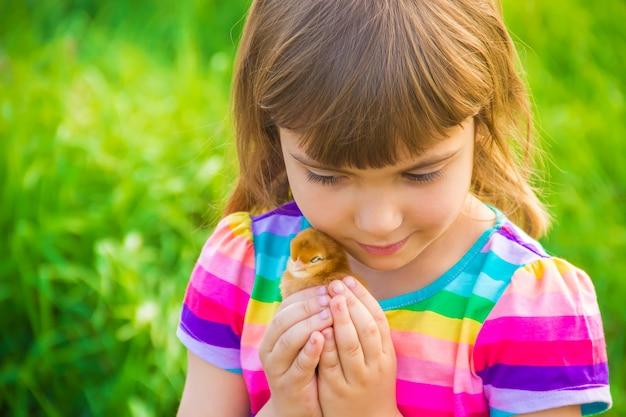 Fille enfant avec du poulet à la main. mise au point sélective.