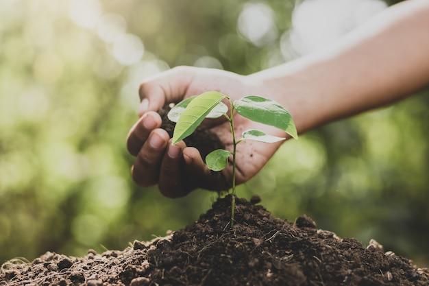Fille est en train de planter un arbre.