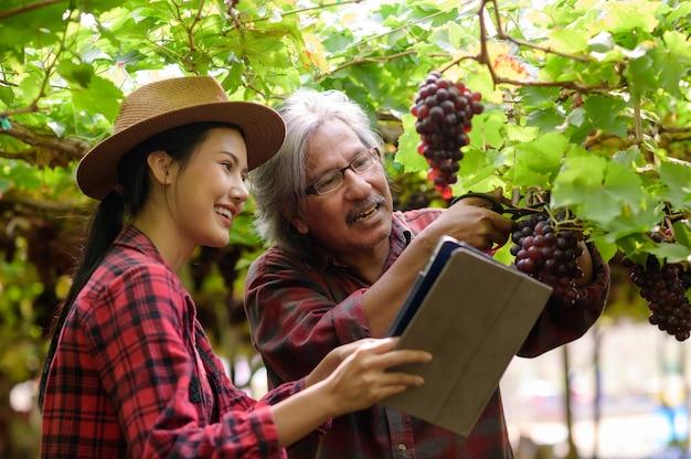 Fille de jardinage tenant les raisins dans sa main dans le vignoble.