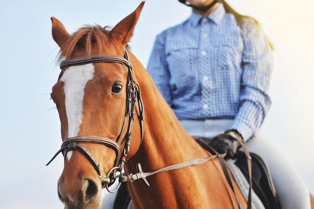 Fille jockey monté sur un cheval