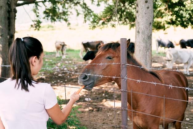 La fille nourrit les carottes du cheval à travers la clôture dans la vue arrière du pâturage