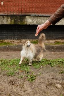 Fille nourrit un chat errant dans la rue en russie