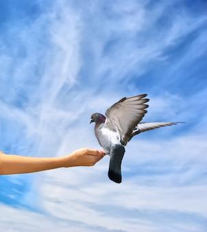 Fille nourrit la colombe