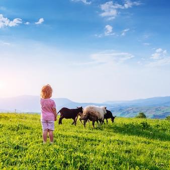 Fille sur prairie avec moutons