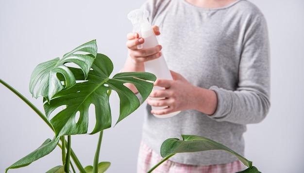Une fille pulvérise de l'eau sur une plante d'intérieur monstera