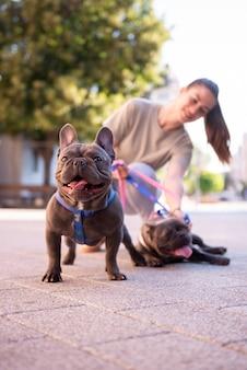 Fille qui promène les chiens à l'extérieur