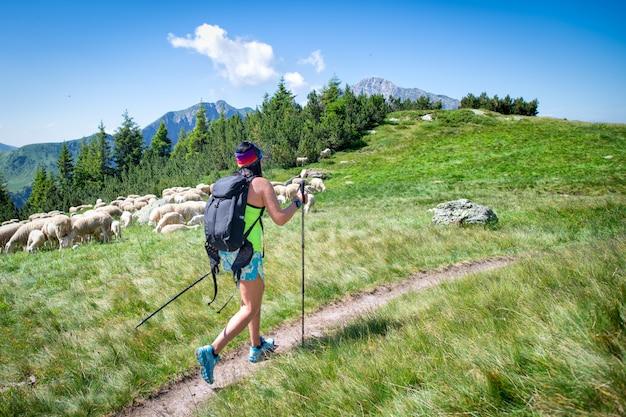Fille sur une randonnée en montagne passe près d'un troupeau de moutons