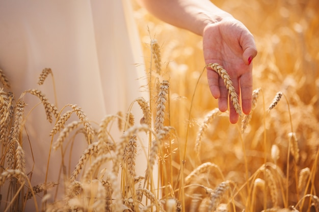 Fille en robe blanche dans le champ. la main touche les oreilles. champs de promenades, blé doré