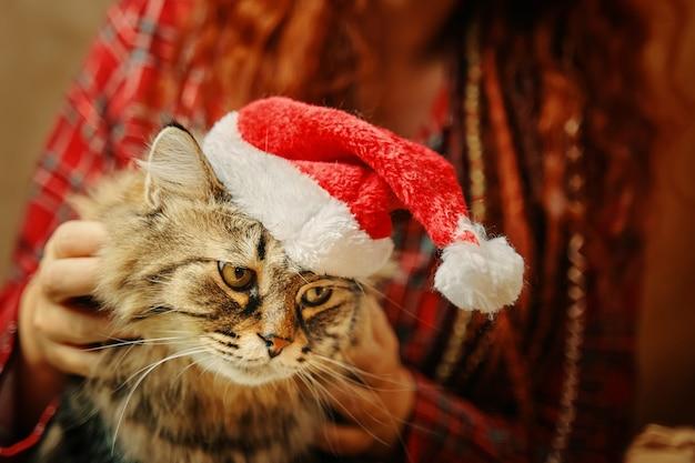 Une fille rousse en pyjama à carreaux douillet tient un chat duveteux dans un chapeau de père noël, une humeur de nouvel an pour animaux de compagnie