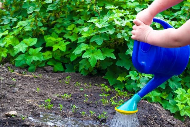 La fille tient un arrosoir à deux mains arrosant le lit dans le jardin travail des enfants
