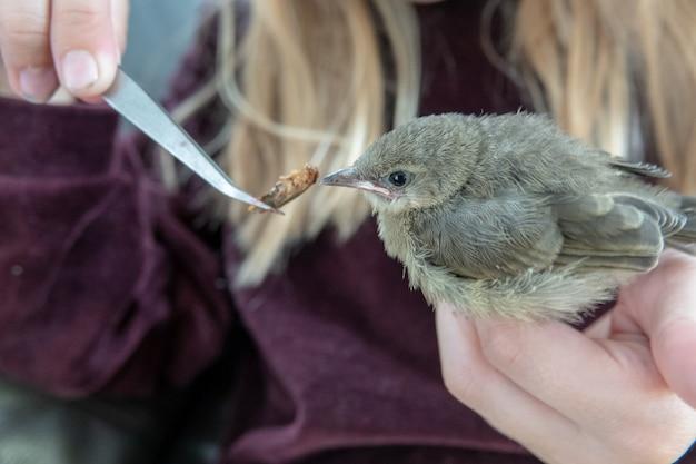 Une fille tient un bébé oiseau dans ses mains et en prend soin