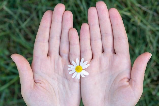 Une fille tient une fleur de camomille des champs dans ses mains
