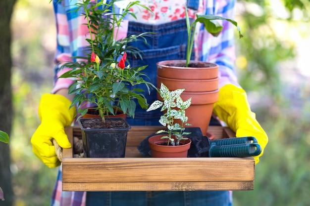 Une fille transplante des fleurs dans le jardin. pots de fleurs et plantes à transplanter