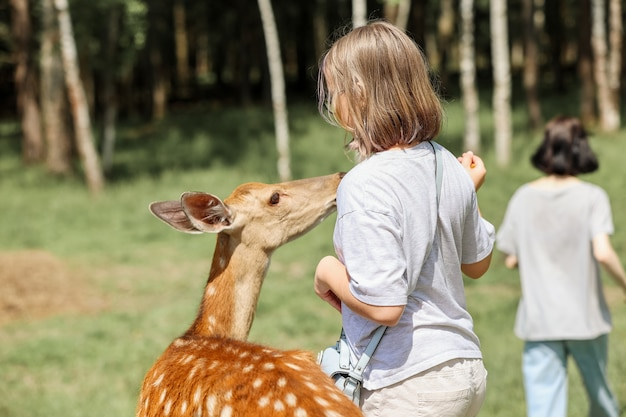 Filles nourrissant de jolis cerfs tachetés bambi au zoo de contact. happy traveller girls aime socialiser avec les animaux sauvages dans le parc national en été.