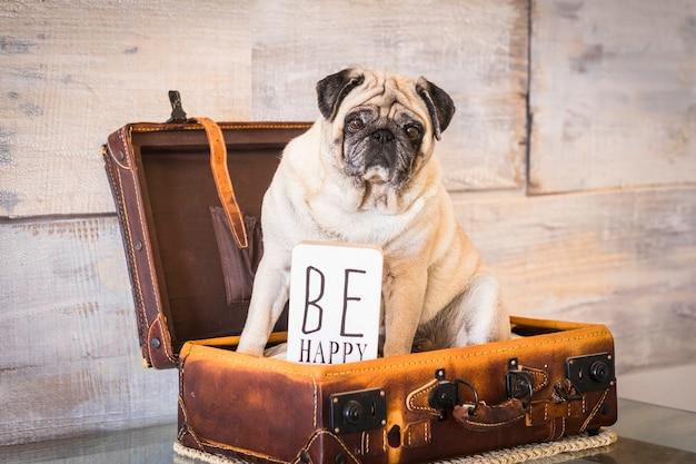 Filtre vintage et scène avec un vieux carlin blanc s'allongea à l'intérieur d'une vieille valise de transport