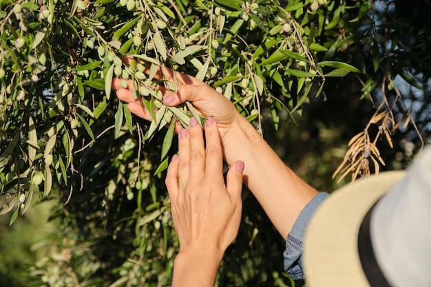 Fin, haut, femme, mains, olive, arbre