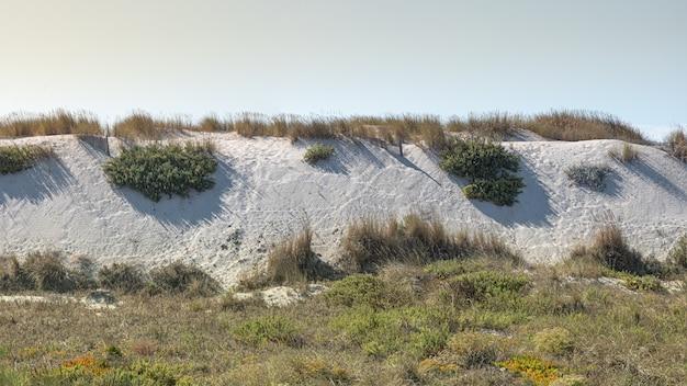 Fines dunes de sable blanc sur la côte