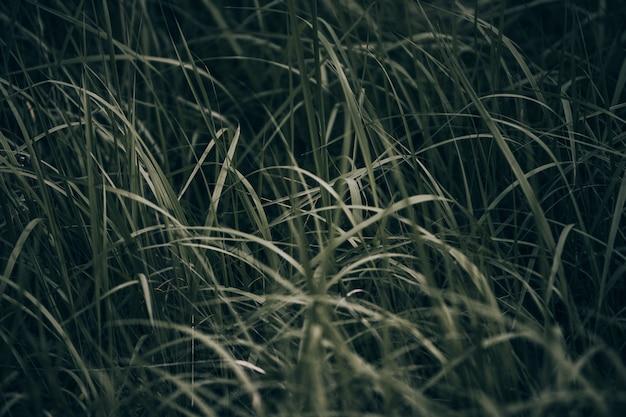 Fines lanières d'herbe vert foncé par temps nuageux