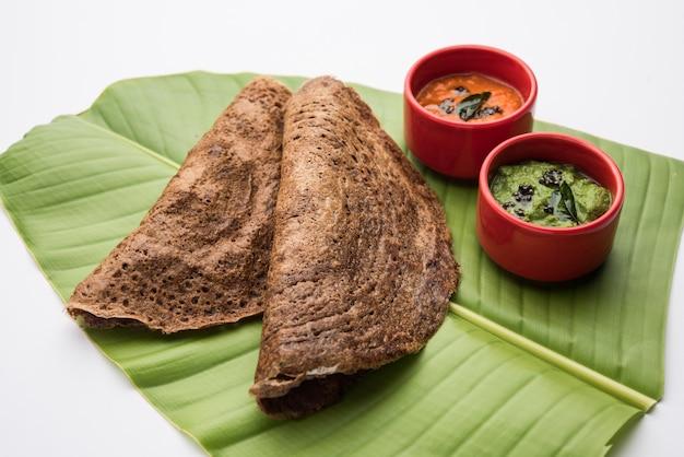Finger millet orã'â ragi dosaã'â est un petit-déjeuner indien sain servi avec du chutney, en forme de rouleau, plat ou conique